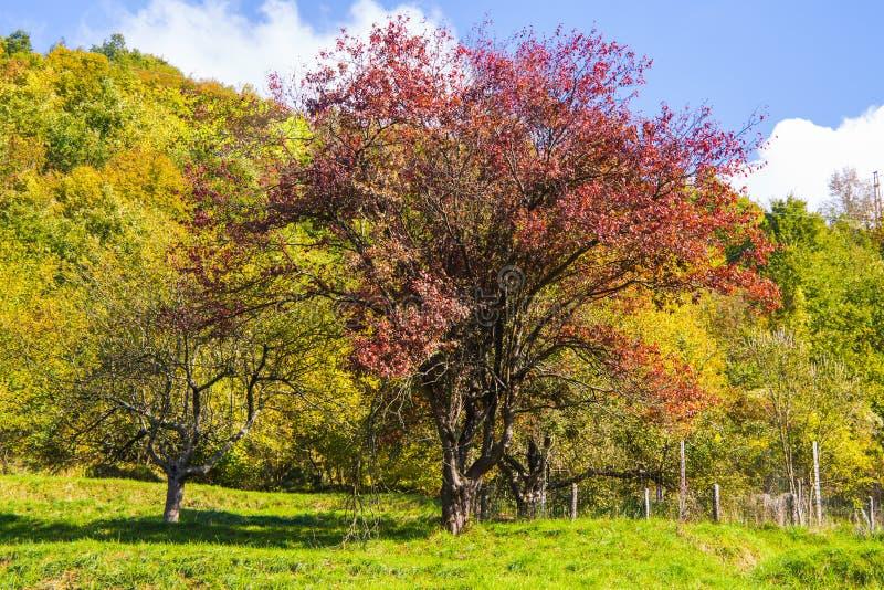 Pré avec des arbres avec des couleurs d'automne, Italie photos stock
