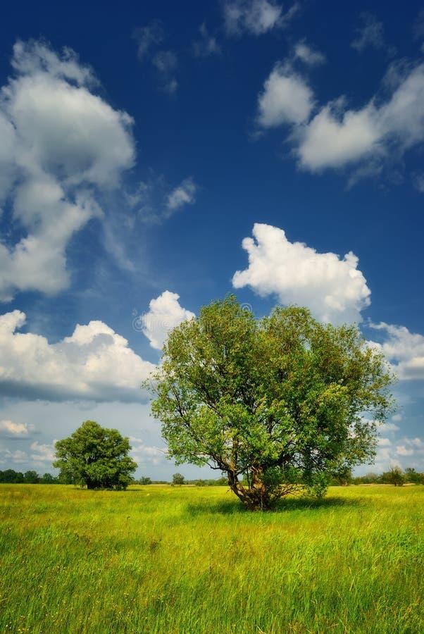 Download Pré avec des arbres en été image stock. Image du vert - 45371277