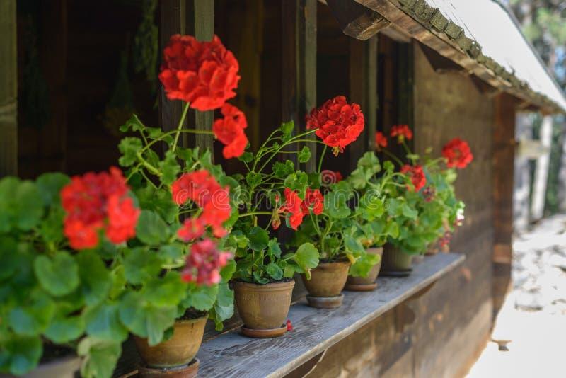 Pré avec des fleurs images stock