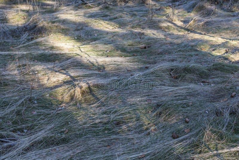 Pré avec l'herbe congelée formée dans les vagues images libres de droits