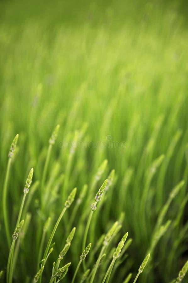 Pré avec l'herbe verte photographie stock