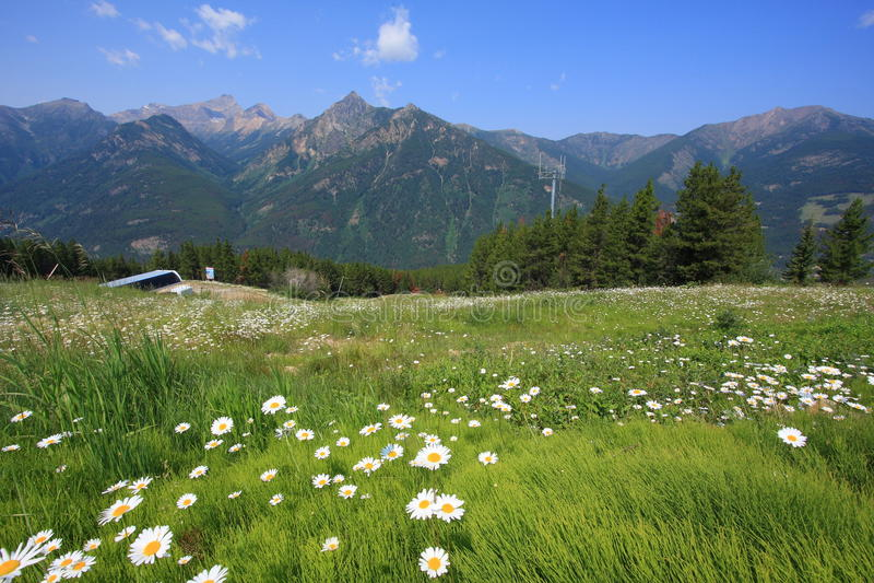 Pré avec les fleurs et la montagne à l'arrière-plan photographie stock