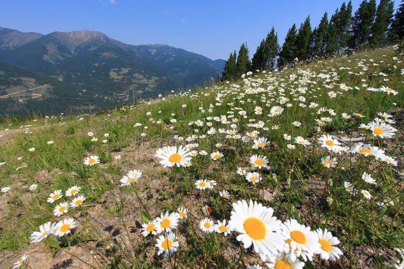 Pré avec les fleurs et la montagne à l'arrière-plan images libres de droits
