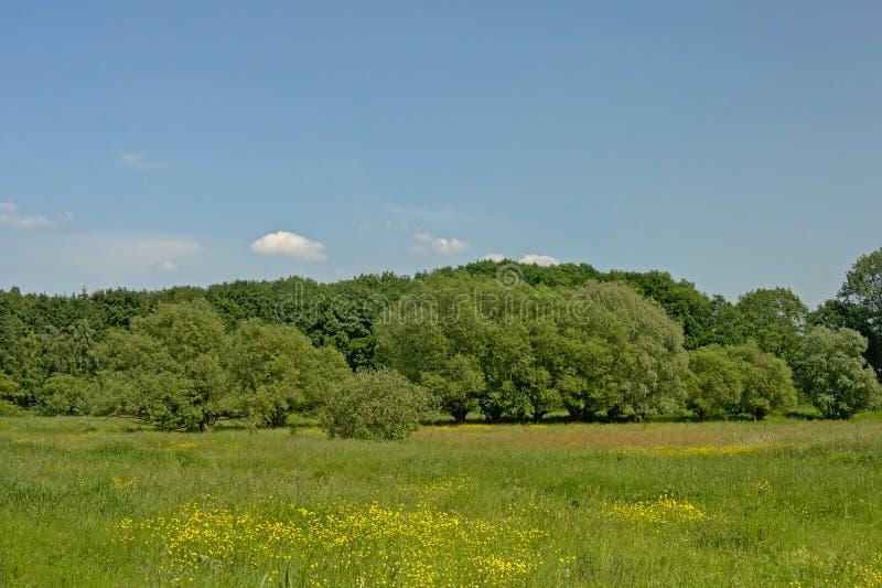 Pré avec les wildflowers jaunes, les saules noués et les arbres de toher en Flandre photos stock