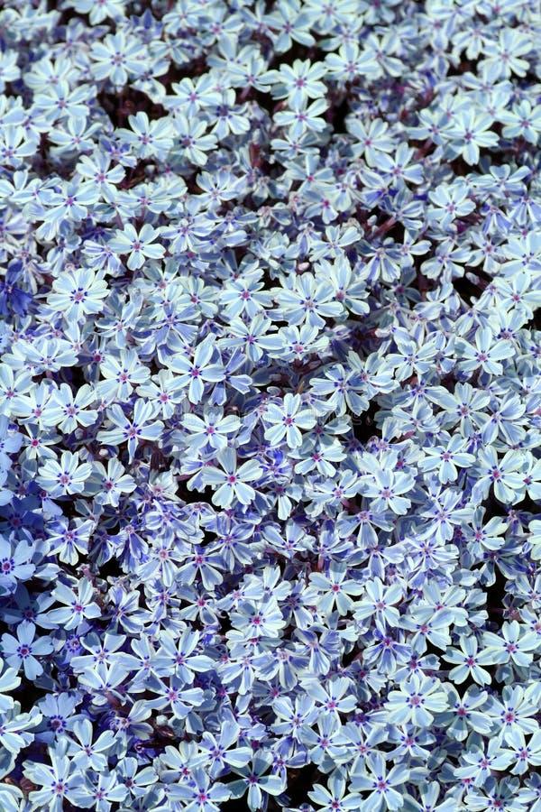 Pré bleu image stock