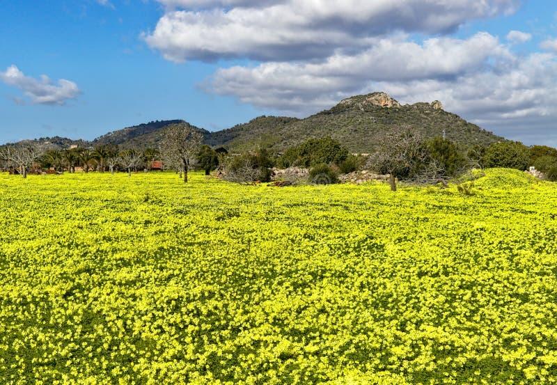 Pré complètement des estrades colorées avec des arbres, des collines et le beau ciel bleu, servera de fils, Majorque, Espagne image stock