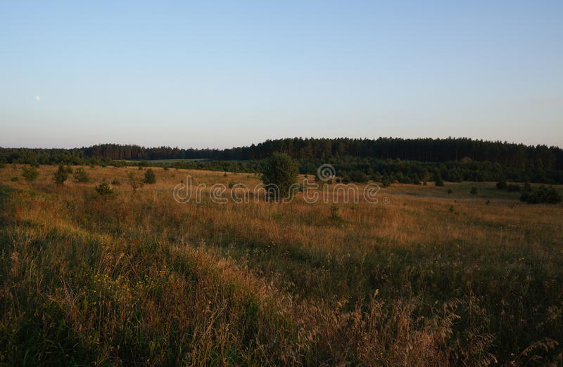 Pré d'herbe d'or sur Masuria polonais (Mazury) photos stock