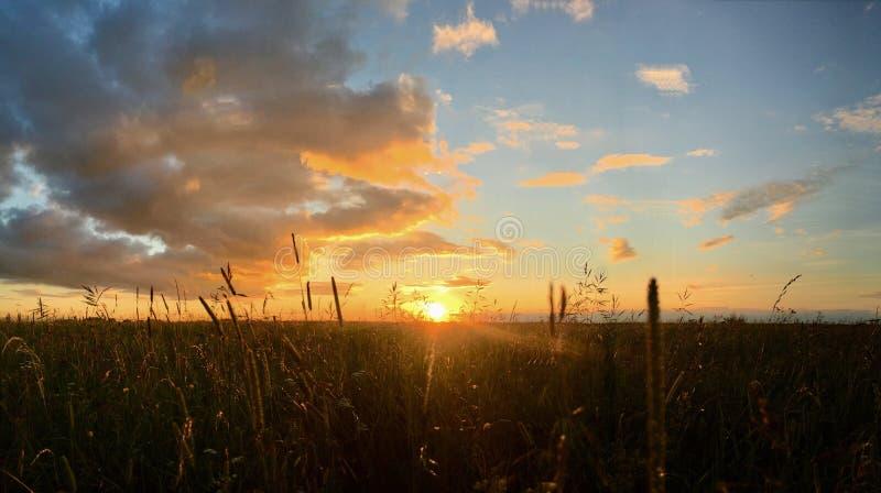Pré dans la lumière de coucher du soleil images libres de droits