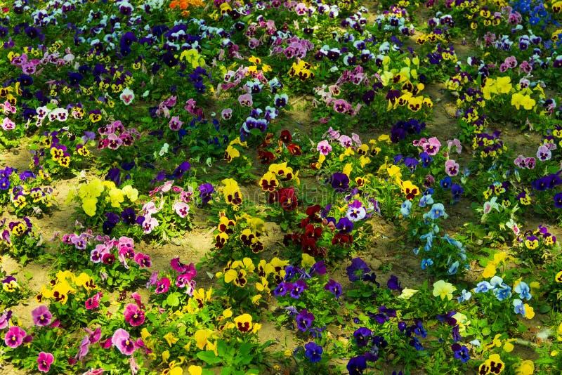 pré de fleur avec les fleurs colorées images stock