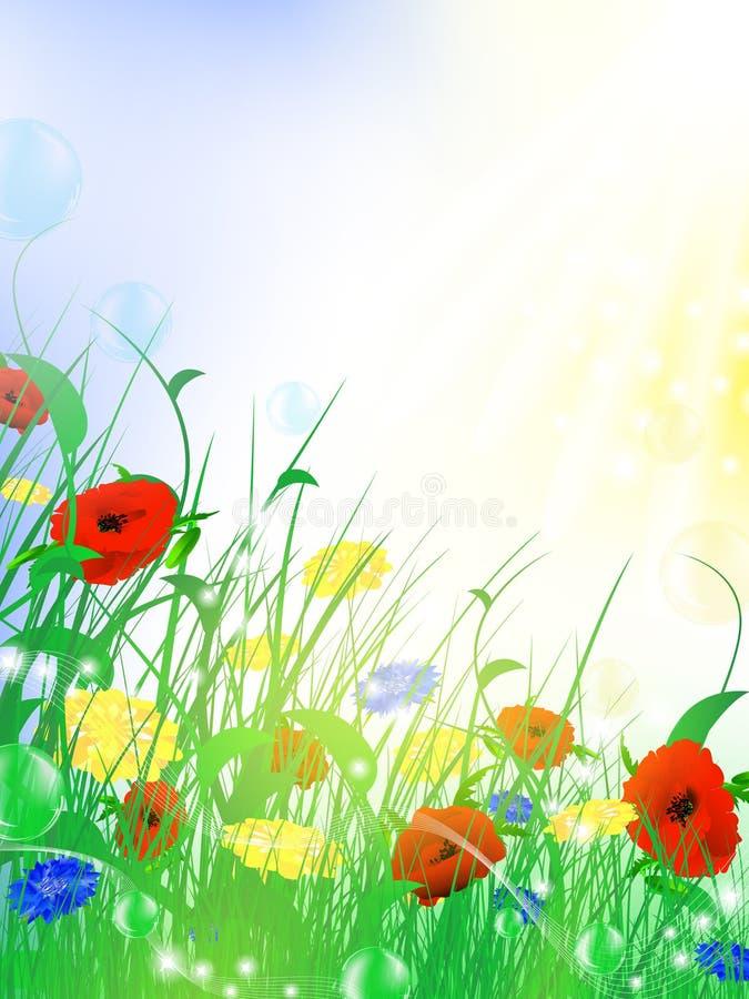 Pré de fleur d'été illustration de vecteur