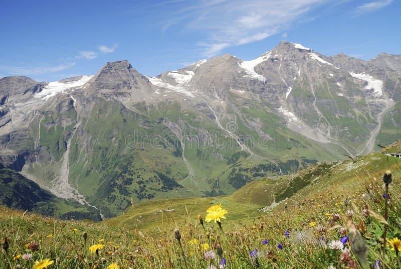 Pré de fleur dans les alpes images libres de droits