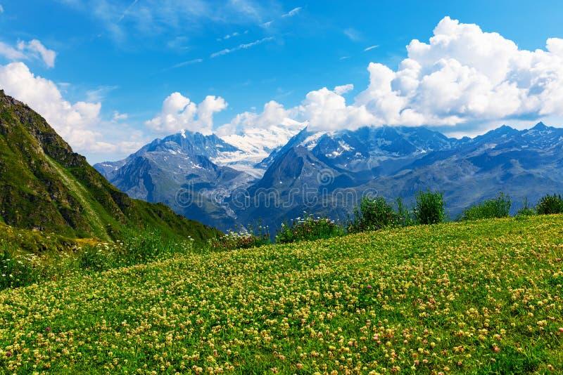Pré de fleur de montagne dans les Alpes, Suisse photos stock