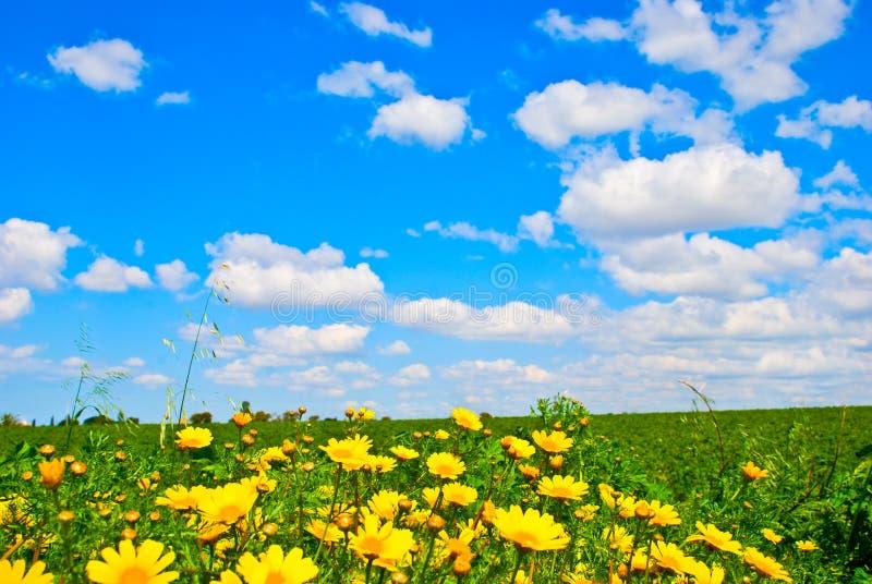 Pré de fleur sauvage photographie stock