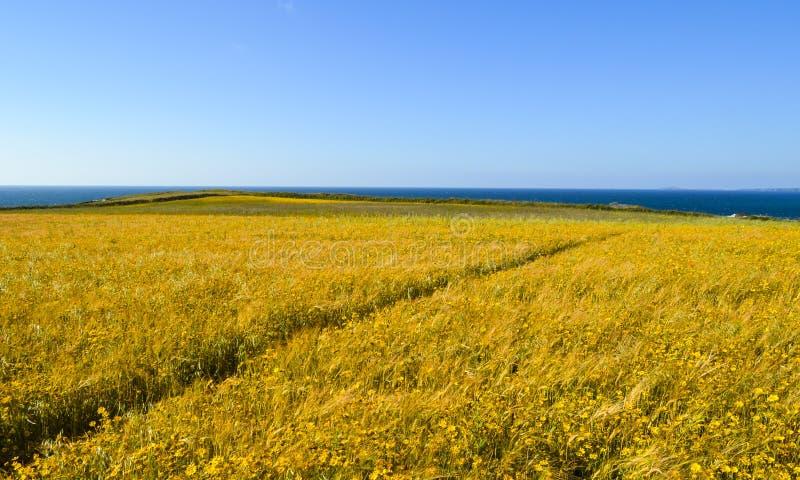 Pré de fleur sauvage Chemin diagonal Paysage marin et ciel bleu photo libre de droits