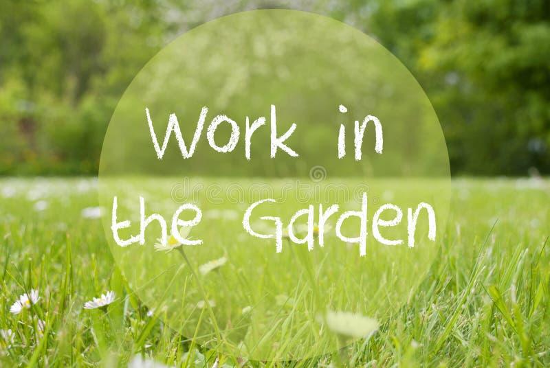 Pré de Gras, Daisy Flowers, travail des textes dans le jardin images stock