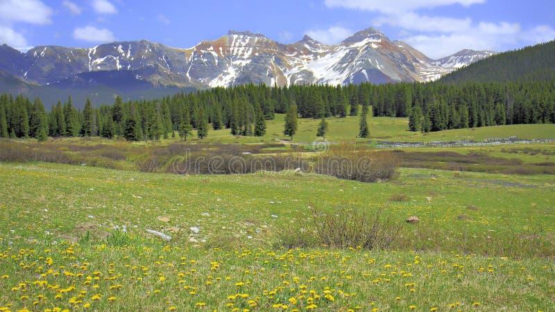 Pré de montagne du Colorado photos libres de droits