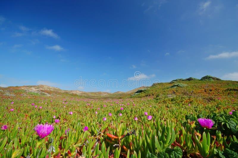 Download Pré de plage photo stock. Image du sable, océan, reyes - 729706
