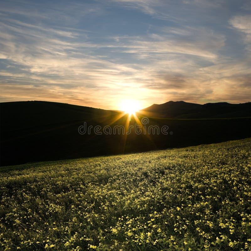 Pré de source au coucher du soleil photo libre de droits