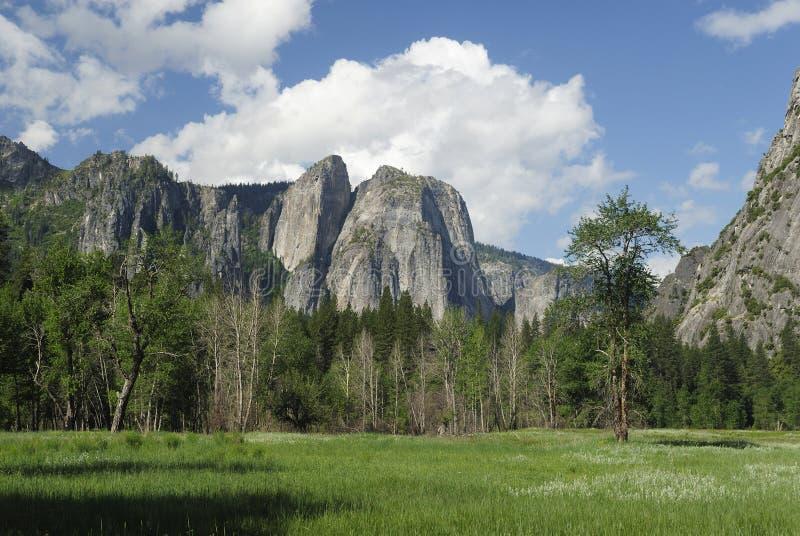 Pré de source en vallée de Yosemite images libres de droits