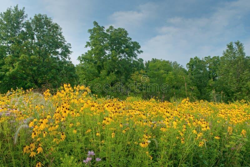 Pré de Wildflower d'été photo libre de droits