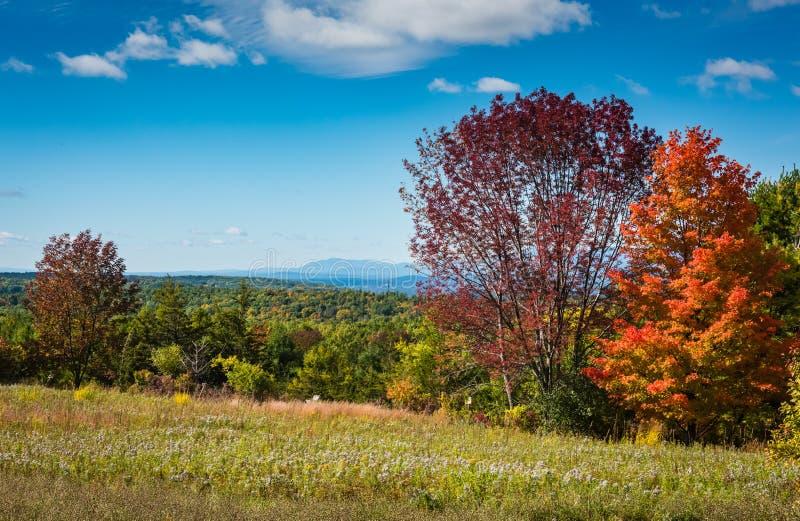 Pré de Wildflower dans les montagnes de Catskill photo stock