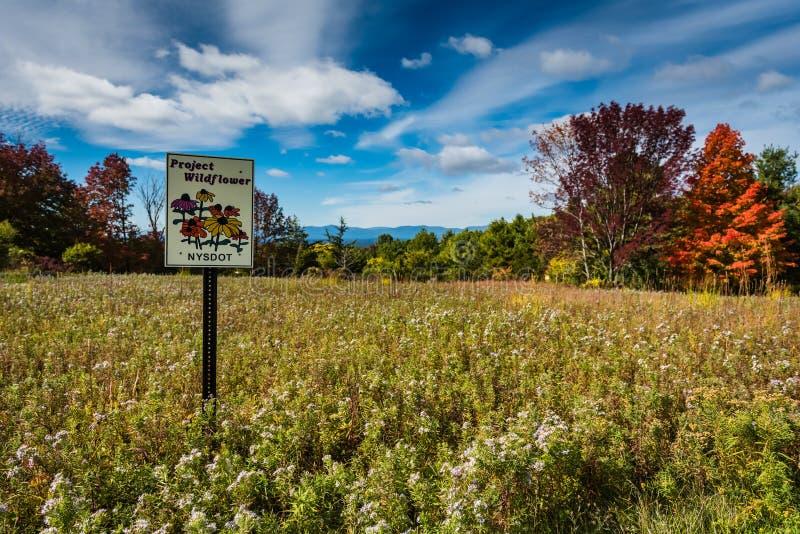 Pré de Wildflower dans les montagnes de Catskill images libres de droits