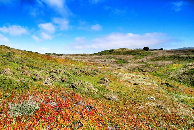 Pré edulis de Carpobrotus et végétation verte dans Cabo DA Roca image libre de droits