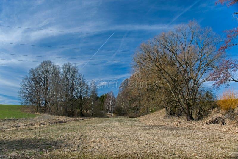 pré entouré par des arbres un jour ensoleillé photo stock