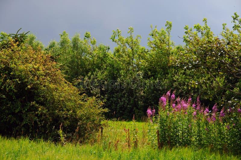 Pré et arbres image libre de droits