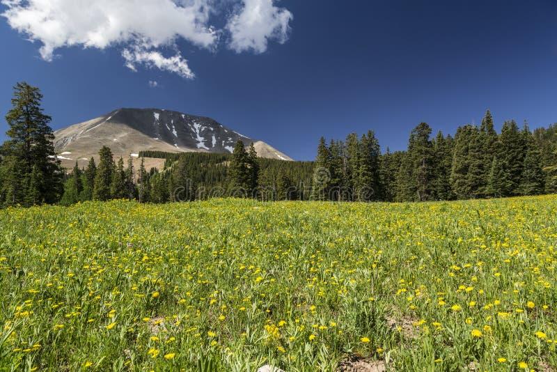 Pré et bâti Peale en Utah photos stock