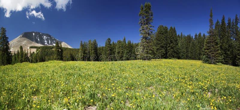 Pré et bâti Peale en Utah panoramique images stock