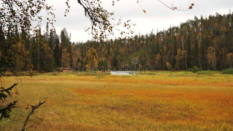 Pré et forêt automnaux image libre de droits