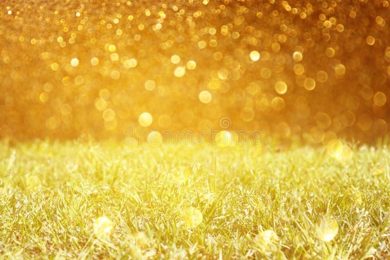 Pré et lumières d'or de scintillement photo stock
