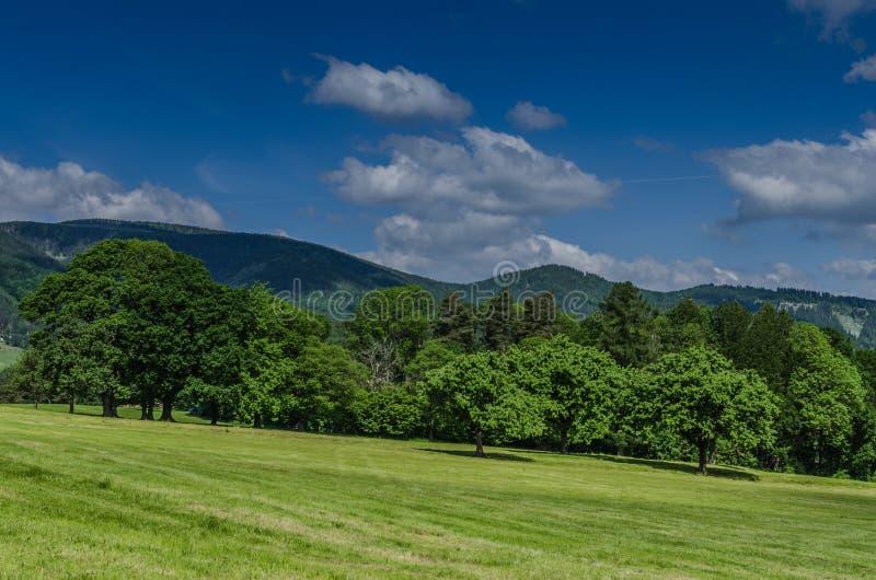 pré et montagnes d'arbres photo stock