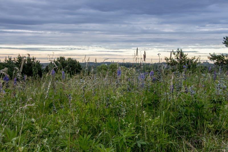 Pré fleurissant, herbe de champ sur le beau fond de ciel images libres de droits