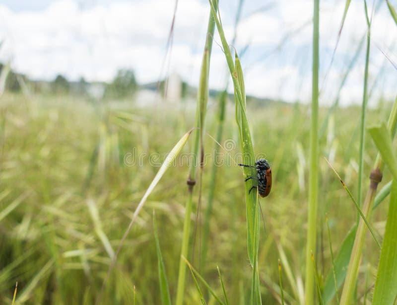 Pré méditerranéen de printemps avec le scarabée images stock
