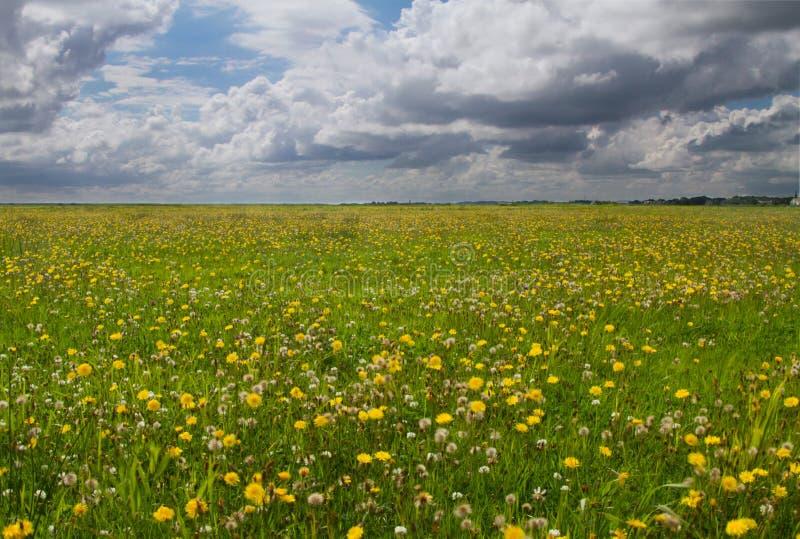 Pré sous le ciel avec les nuages foncés images libres de droits