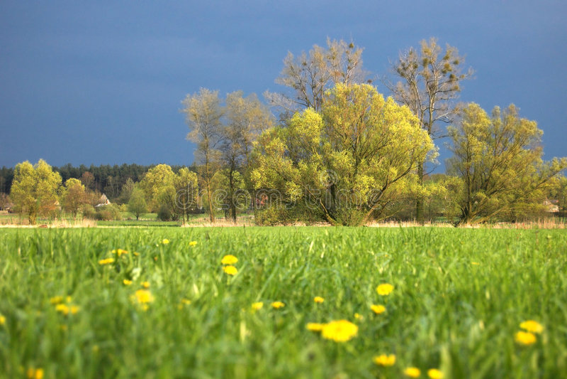 Download Pré vert image stock. Image du paysage, fleurs, village - 738567