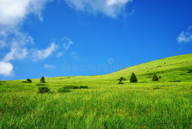 Pré vert alpestre en montagnes image stock