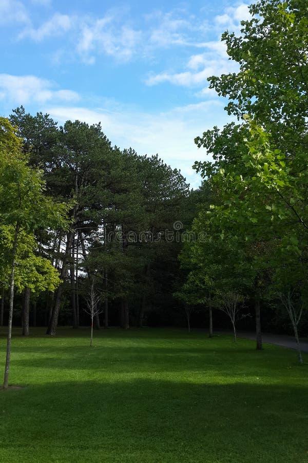 Pré vert au milieu du parc, arbres feuillus, haut parc, Toronto, Canada image stock