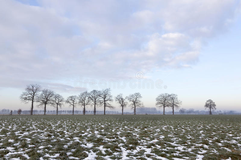 Pré vert avec des corrections de ligne de neige et d'arbre près de Wageningen photographie stock