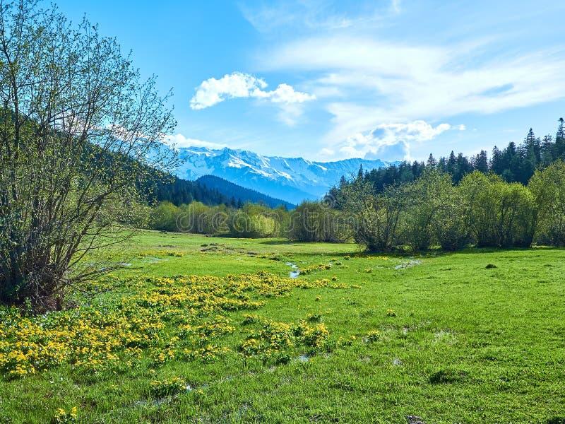 Pré vert de ressort dans les montagnes de Svaneti image stock