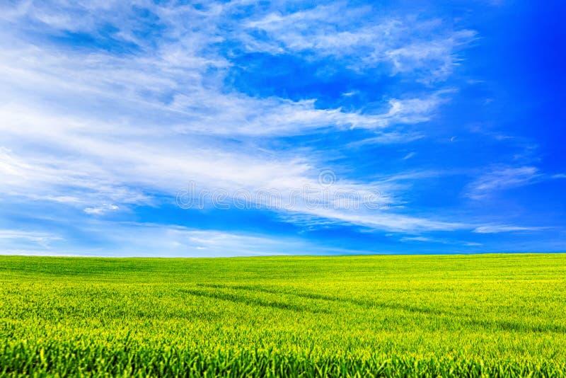 Pré vert et ciel étonnant photo libre de droits