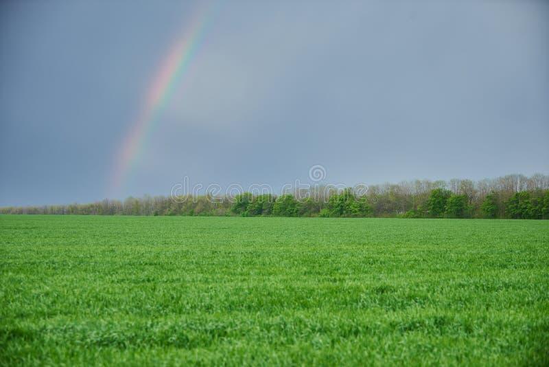 pré vert et ciel bleu avec arc-en-ciel en été photo libre de droits