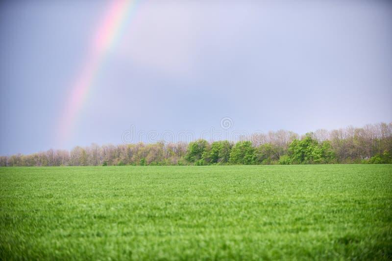 pré vert et ciel bleu avec arc-en-ciel en été image libre de droits
