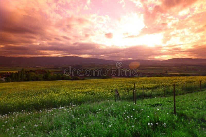 Pré vert sous le ciel de coucher du soleil photo stock
