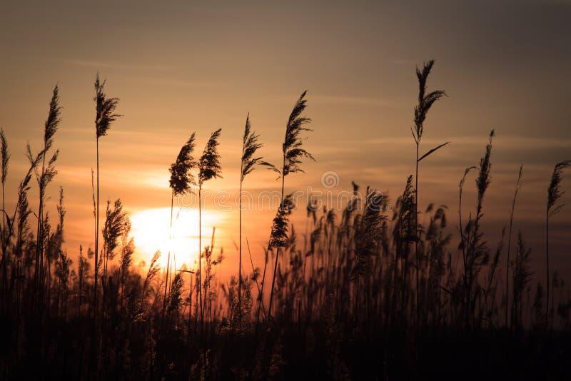 Précipitation grande dans les rayons du Soleil Levant photo stock