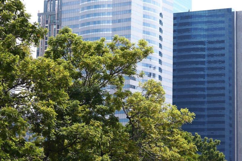 Prédio de escritórios e carvalho verde foto de stock