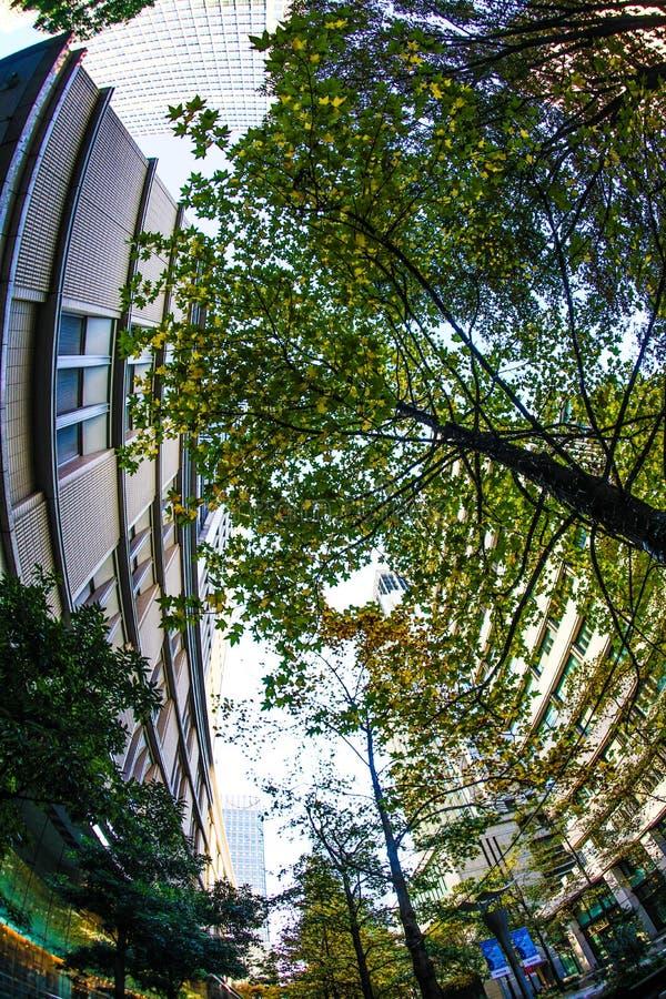 Prédio de escritórios e o verde fresco do distrito financeiro foto de stock