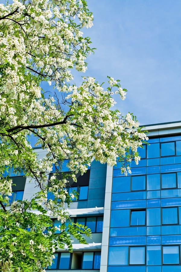 Prédio de escritórios verde do negócio imagens de stock